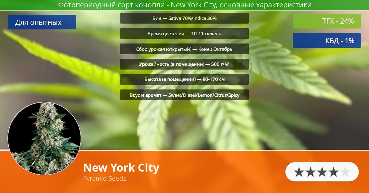 Инфограмма сорта марихуаны New York City