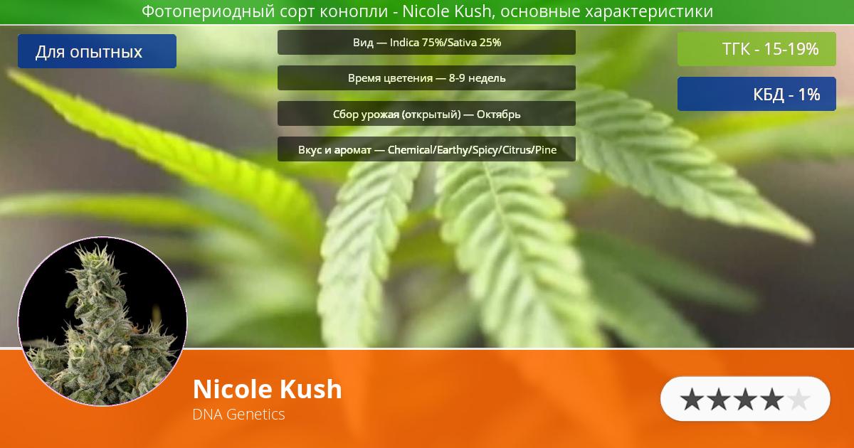 Инфограмма сорта марихуаны Nicole Kush