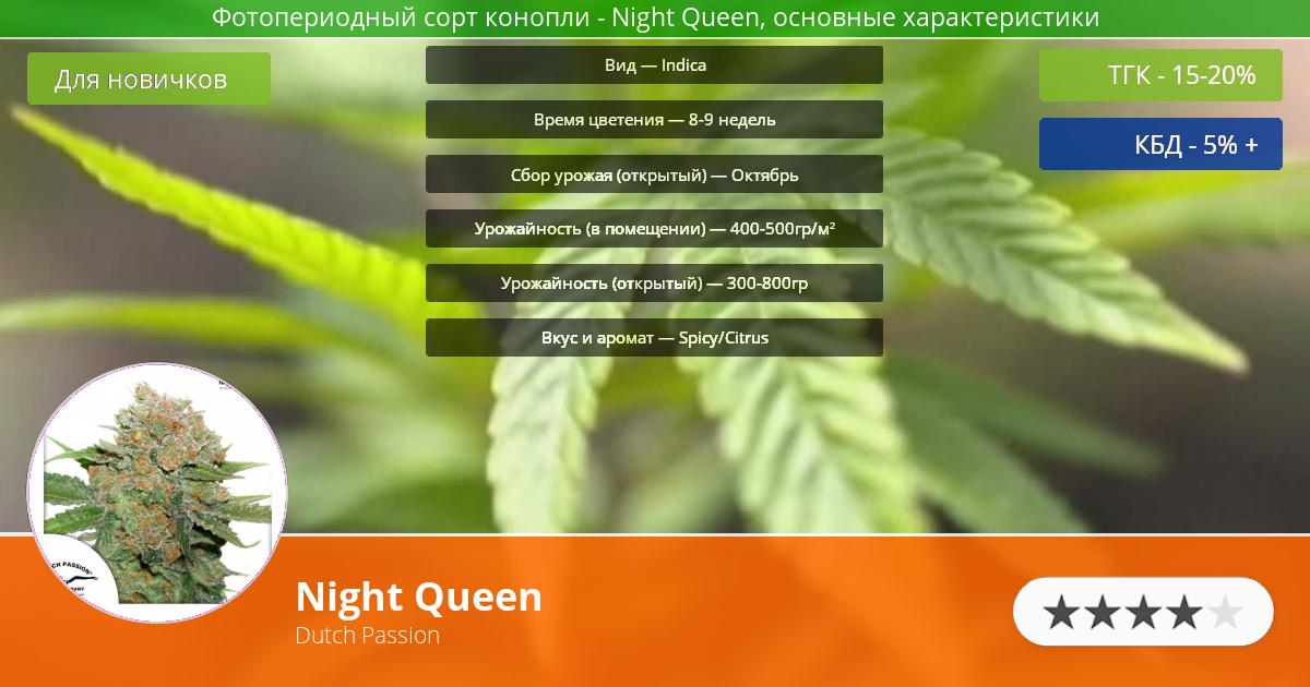Инфограмма сорта марихуаны Night Queen