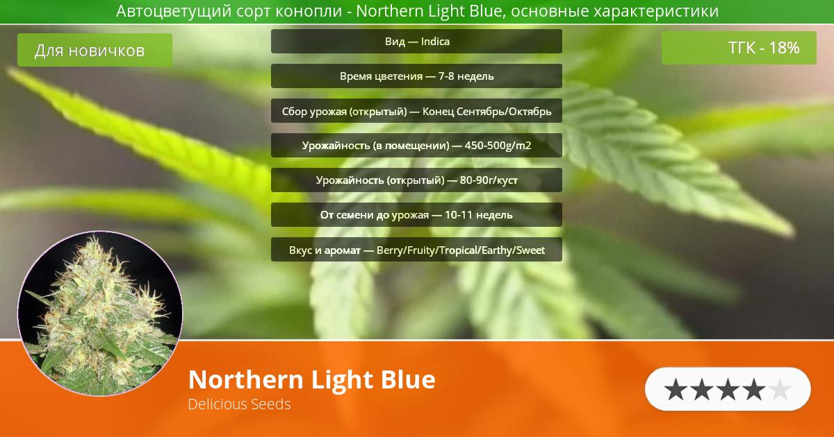 Инфограмма сорта марихуаны Northern Light Blue