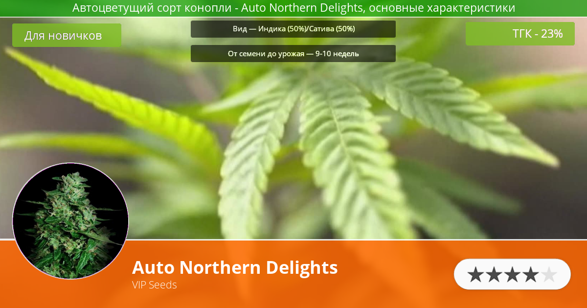 Инфограмма сорта марихуаны Auto Northern Delights