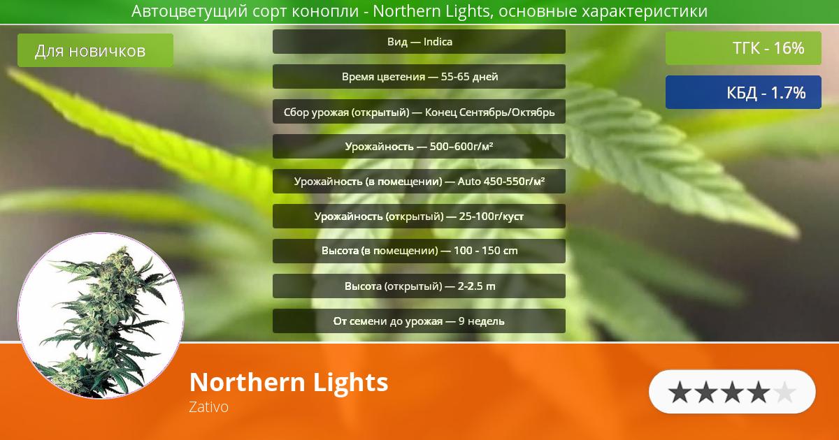 Инфограмма сорта марихуаны Northern Lights