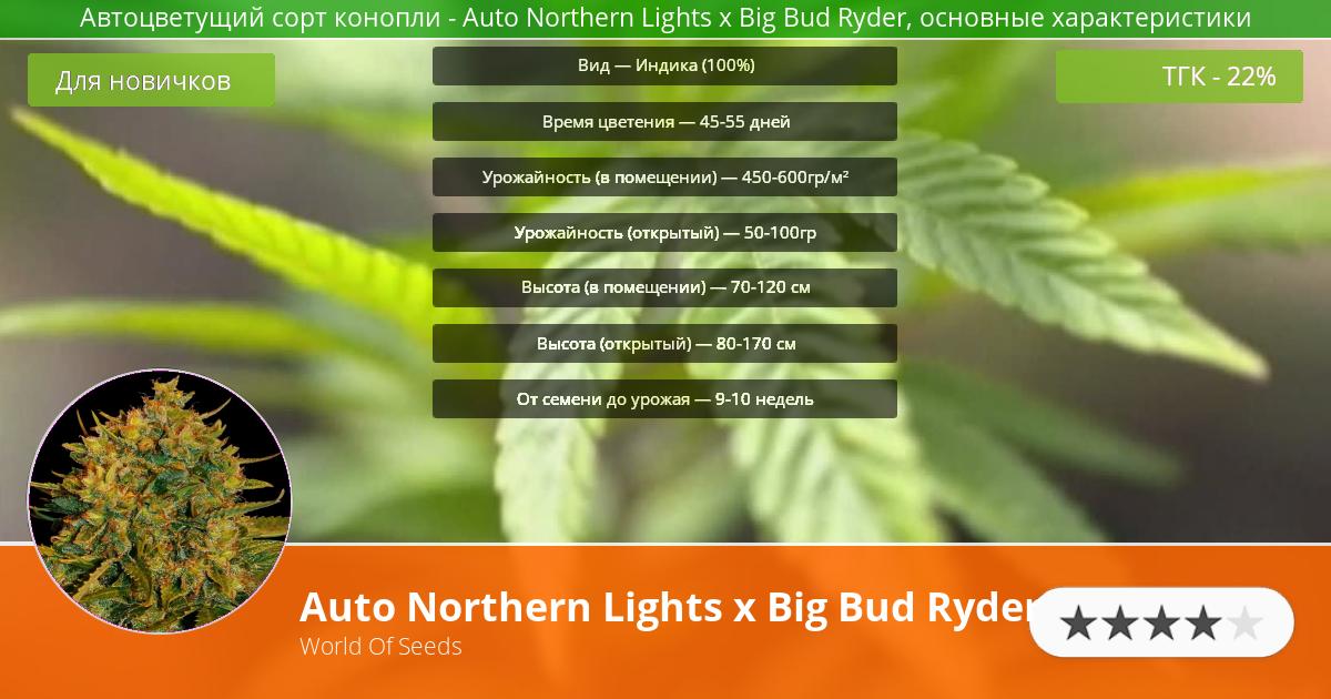 Инфограмма сорта марихуаны Auto Northern Lights x Big Bud Ryder