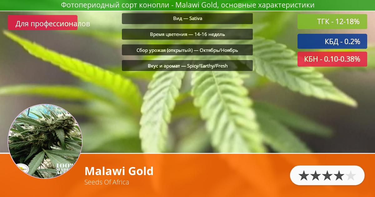 Инфограмма сорта марихуаны Malawi Gold