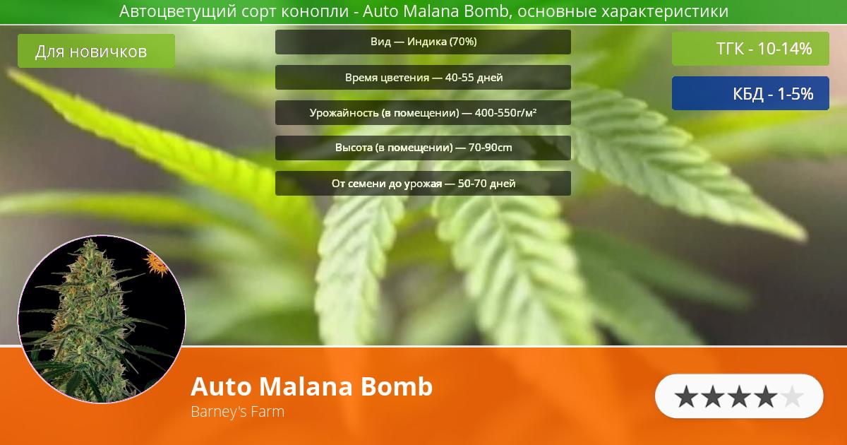Инфограмма сорта марихуаны Auto Malana Bomb