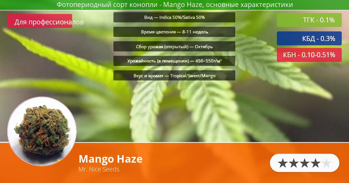 Инфограмма сорта марихуаны Mango Haze