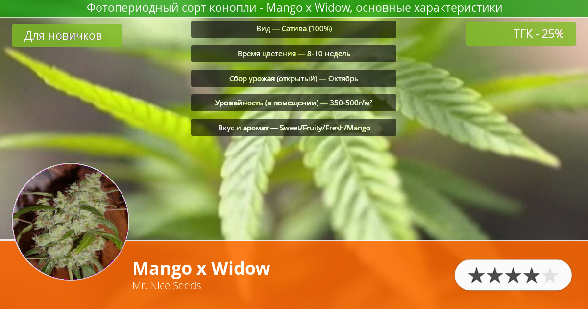 Инфограмма сорта марихуаны Mango x Widow