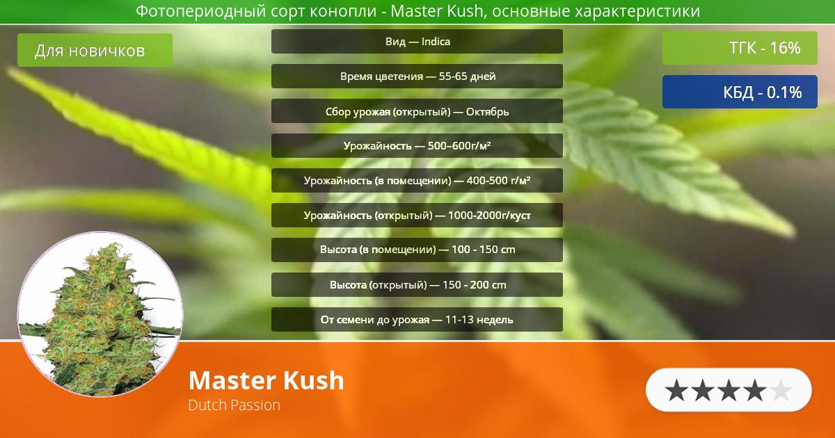 Инфограмма сорта марихуаны Master Kush