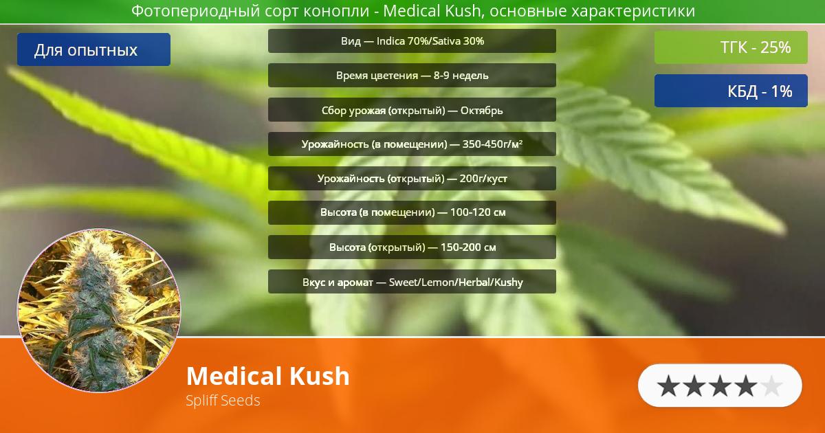 Инфограмма сорта марихуаны Medical Kush