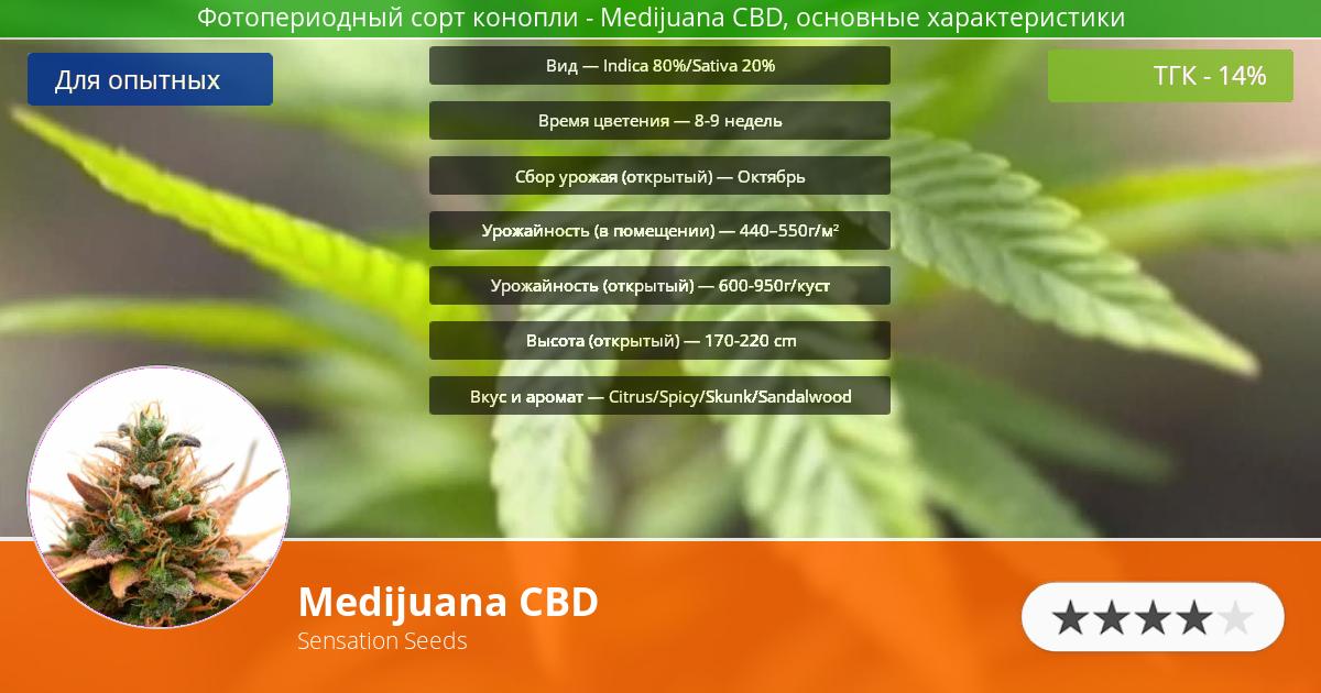 Инфограмма сорта марихуаны Medijuana CBD