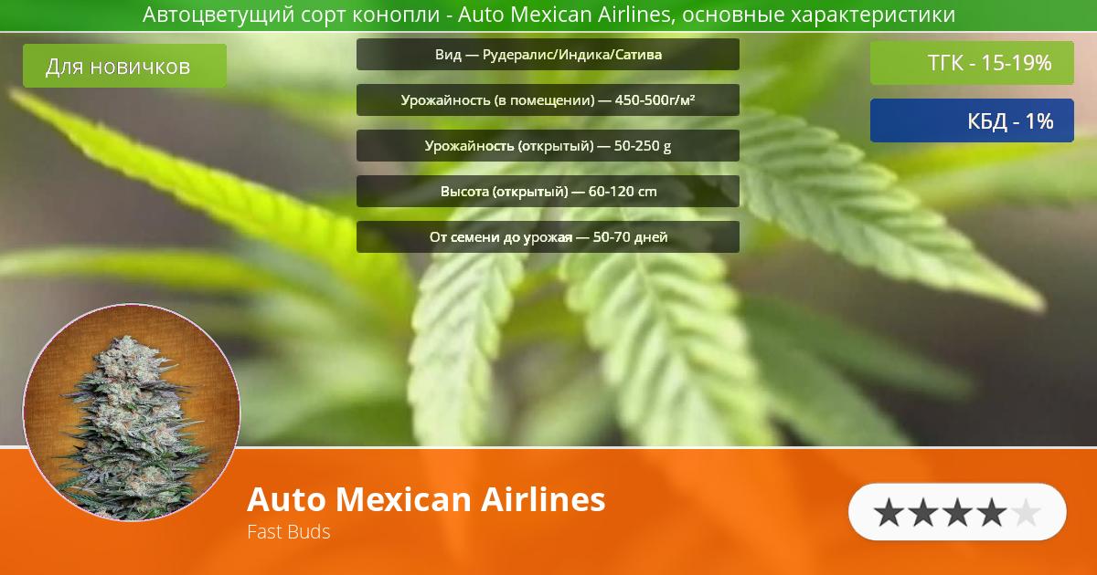 Инфограмма сорта марихуаны Auto Mexican Airlines