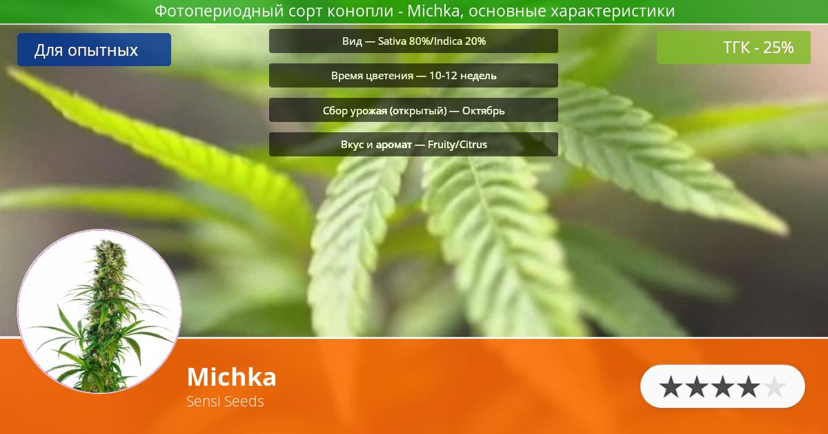 Инфограмма сорта марихуаны Michka