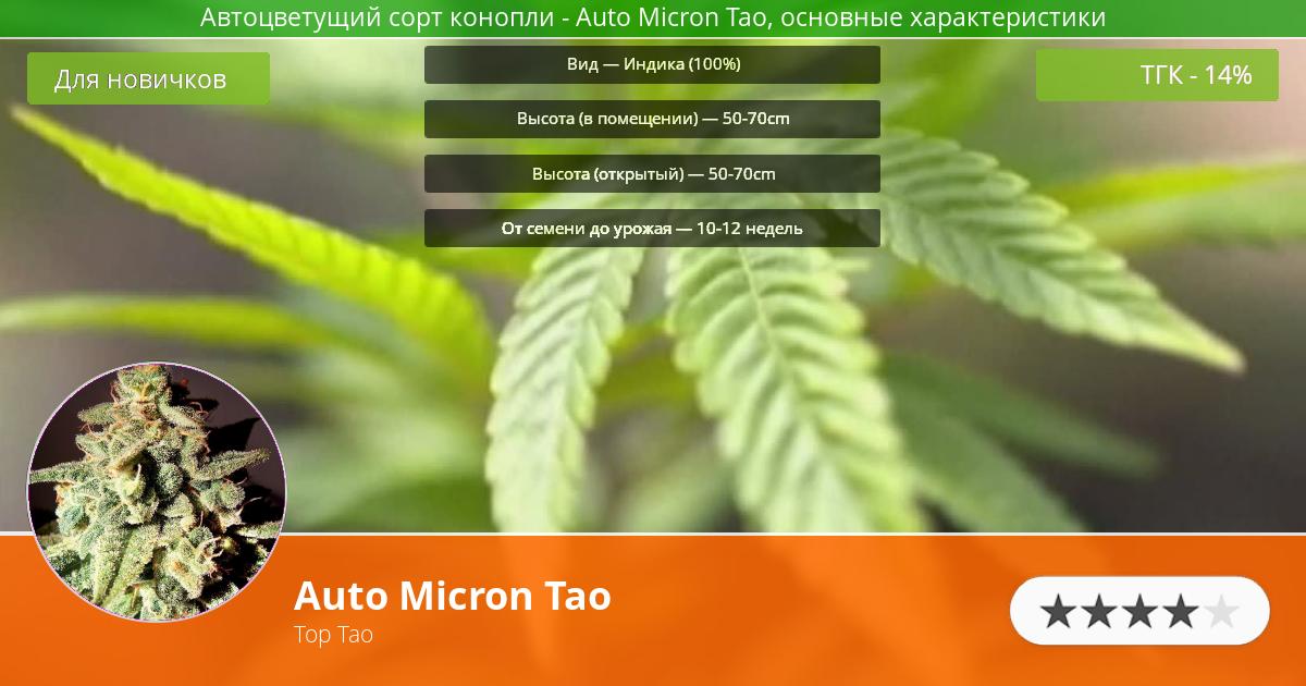 Инфограмма сорта марихуаны Auto Micron Tao