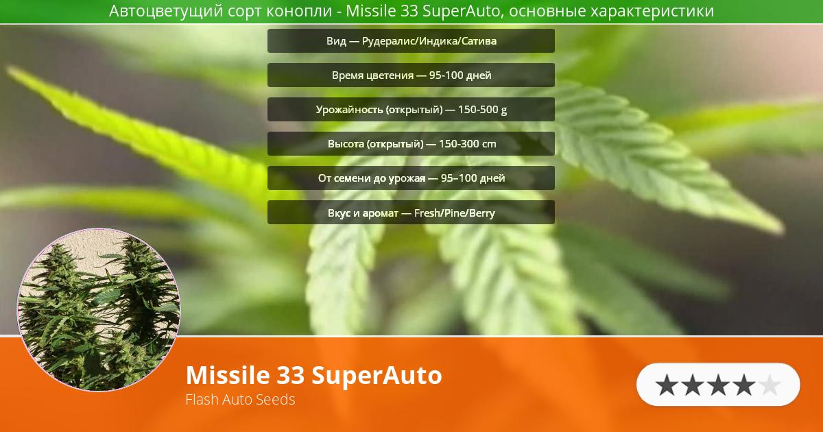 Инфограмма сорта марихуаны Missile 33 SuperAuto