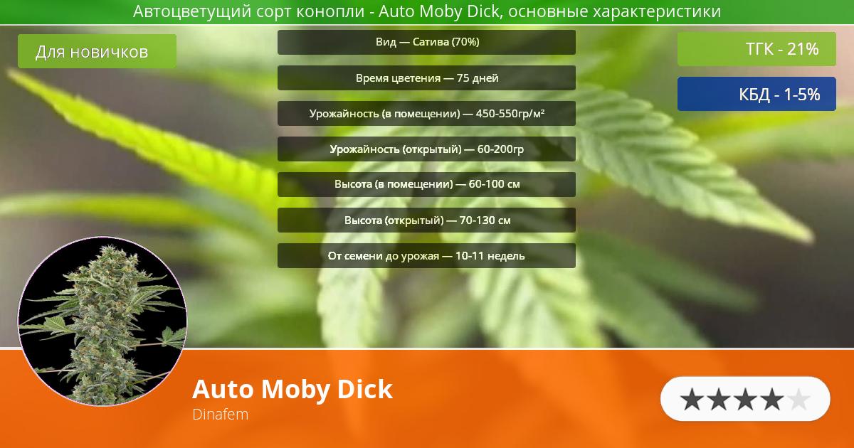 Инфограмма сорта марихуаны Auto Moby Dick