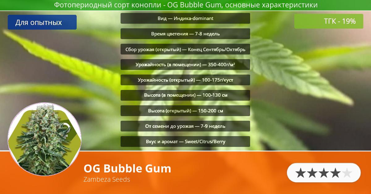 Инфограмма сорта марихуаны OG Bubble Gum