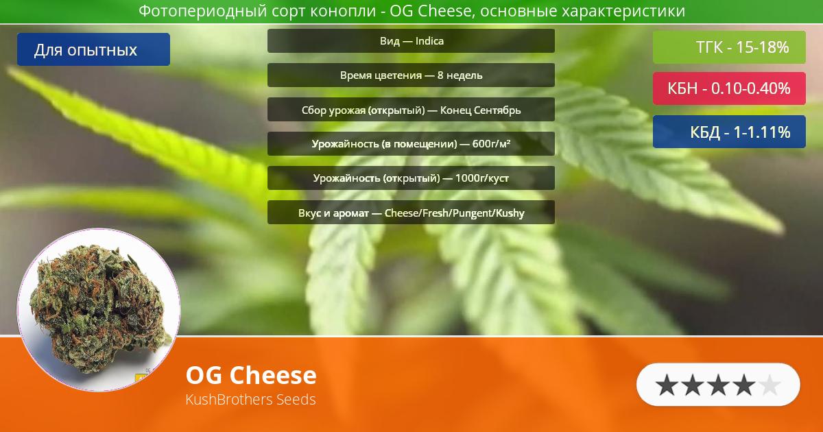 Инфограмма сорта марихуаны OG Cheese