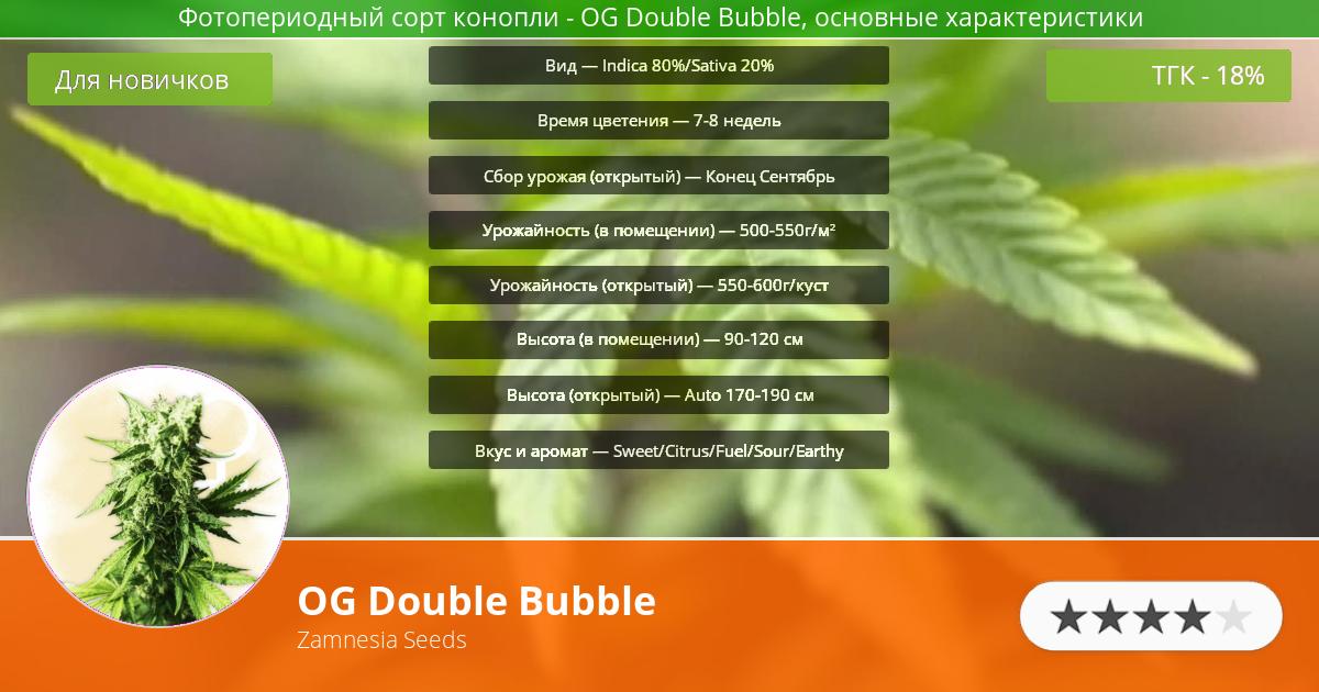 Инфограмма сорта марихуаны OG Double Bubble