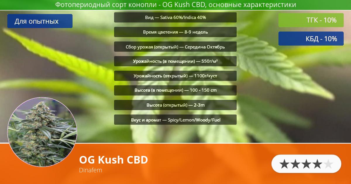 Инфограмма сорта марихуаны OG Kush CBD