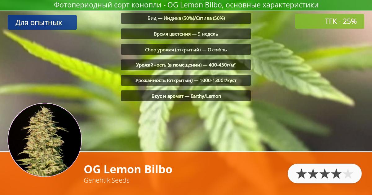 Инфограмма сорта марихуаны OG Lemon Bilbo