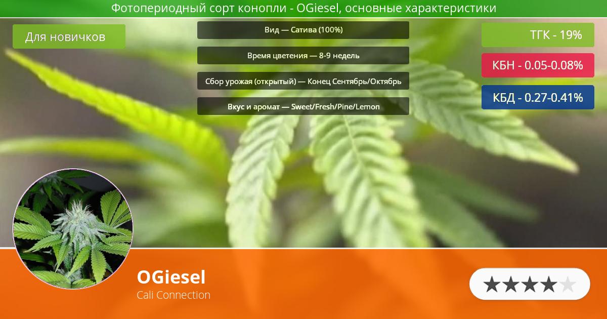 Инфограмма сорта марихуаны OGiesel