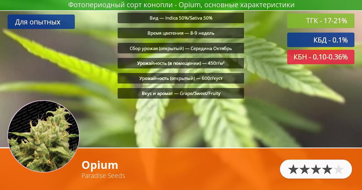 Инфограмма сорта марихуаны Opium