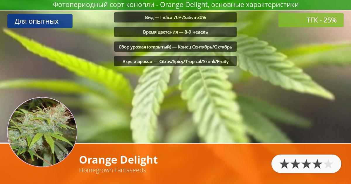 Инфограмма сорта марихуаны Orange Delight