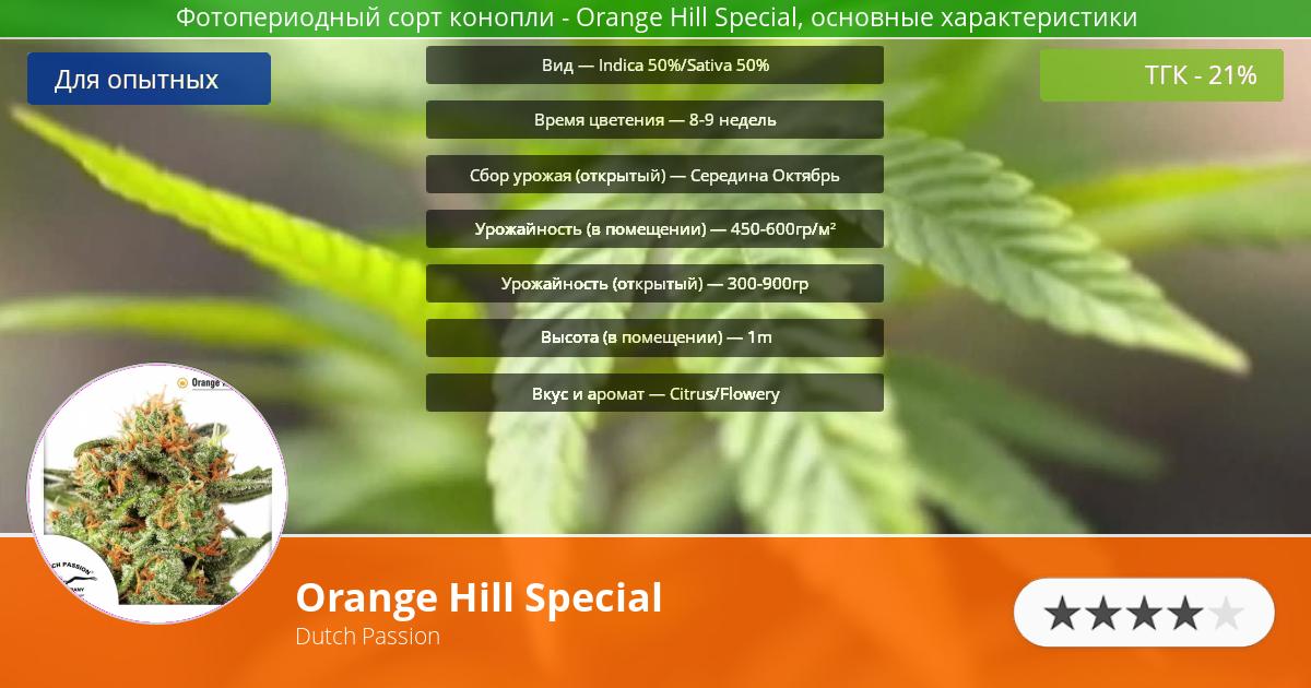 Инфограмма сорта марихуаны Orange Hill Special