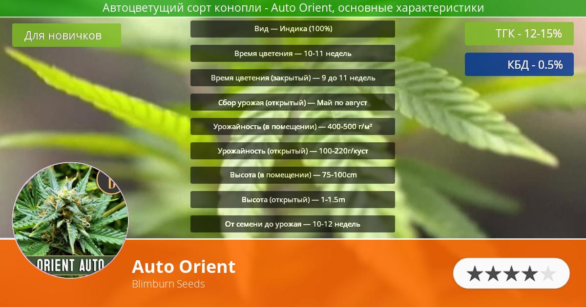 Инфограмма сорта марихуаны Auto Orient