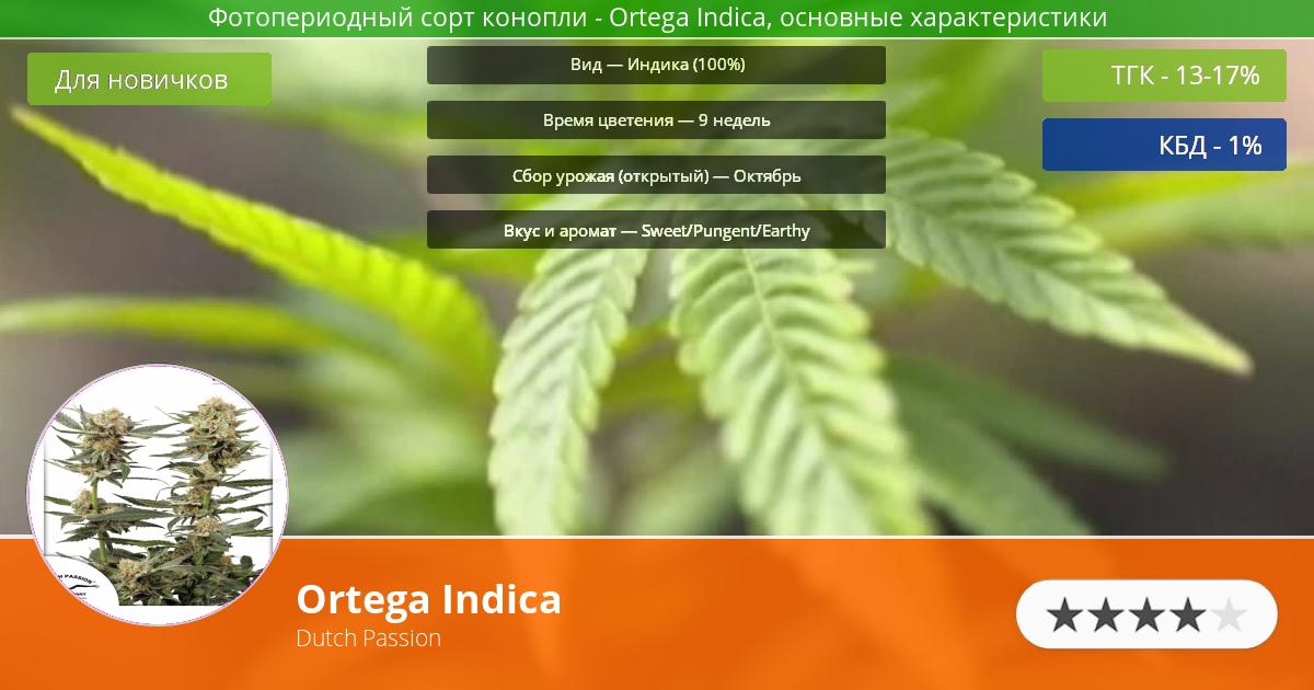 Инфограмма сорта марихуаны Ortega Indica