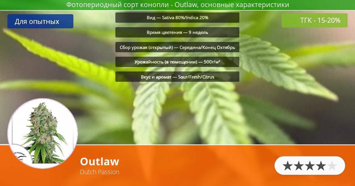 Инфограмма сорта марихуаны Outlaw