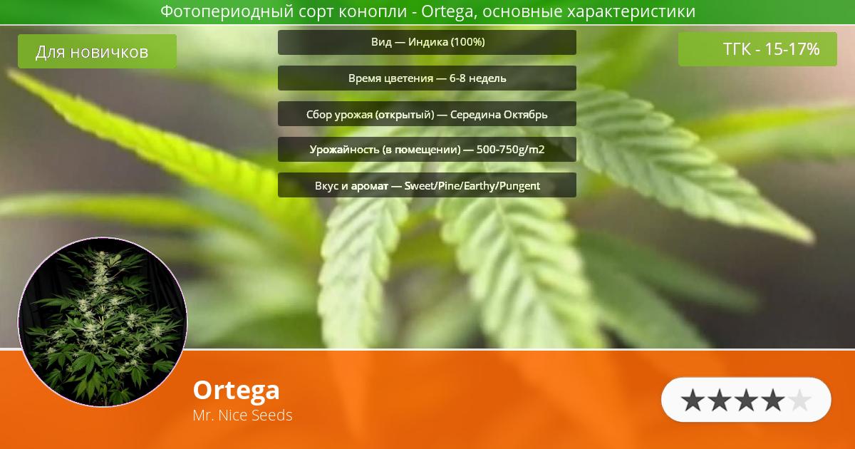 Инфограмма сорта марихуаны Ortega