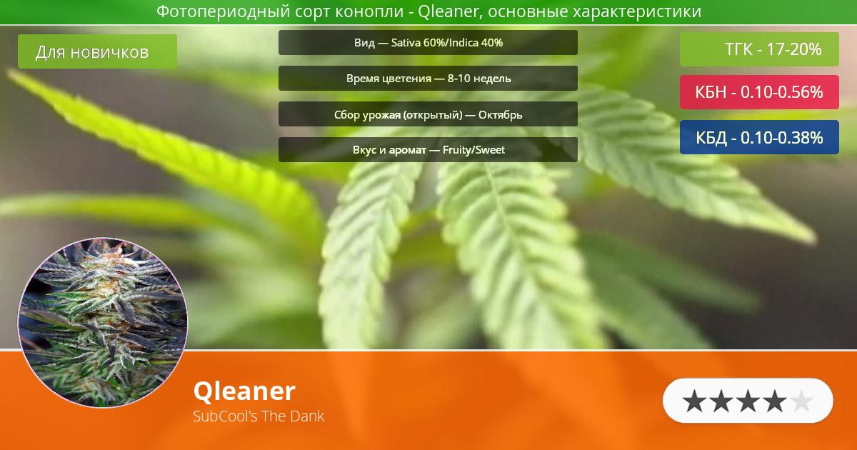 Инфограмма сорта марихуаны Qleaner