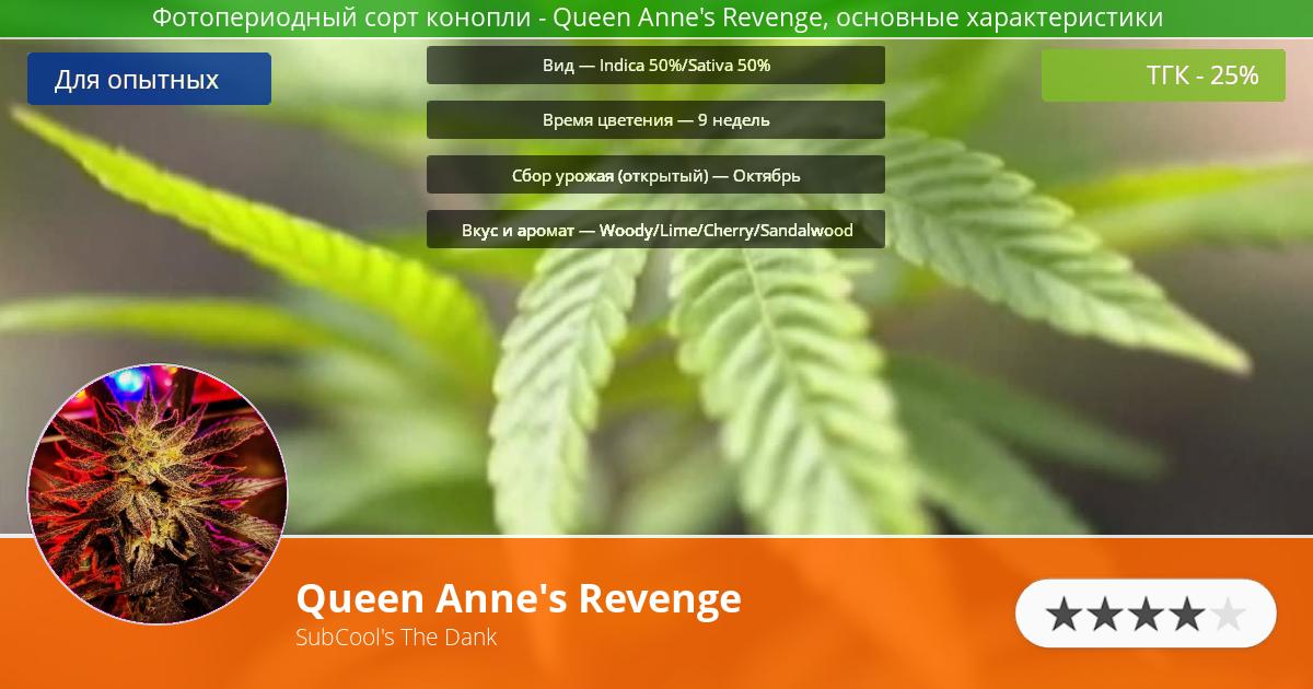 Инфограмма сорта марихуаны Queen Anne's Revenge