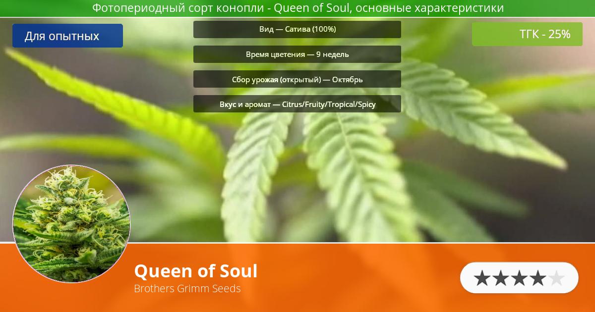 Инфограмма сорта марихуаны Queen of Soul