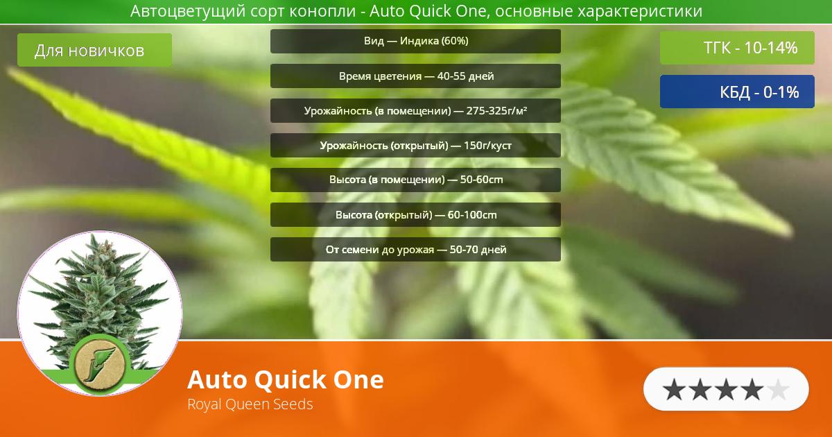 Инфограмма сорта марихуаны Auto Quick One