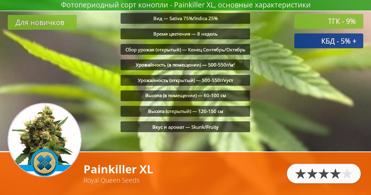 Инфограмма сорта марихуаны Painkiller XL