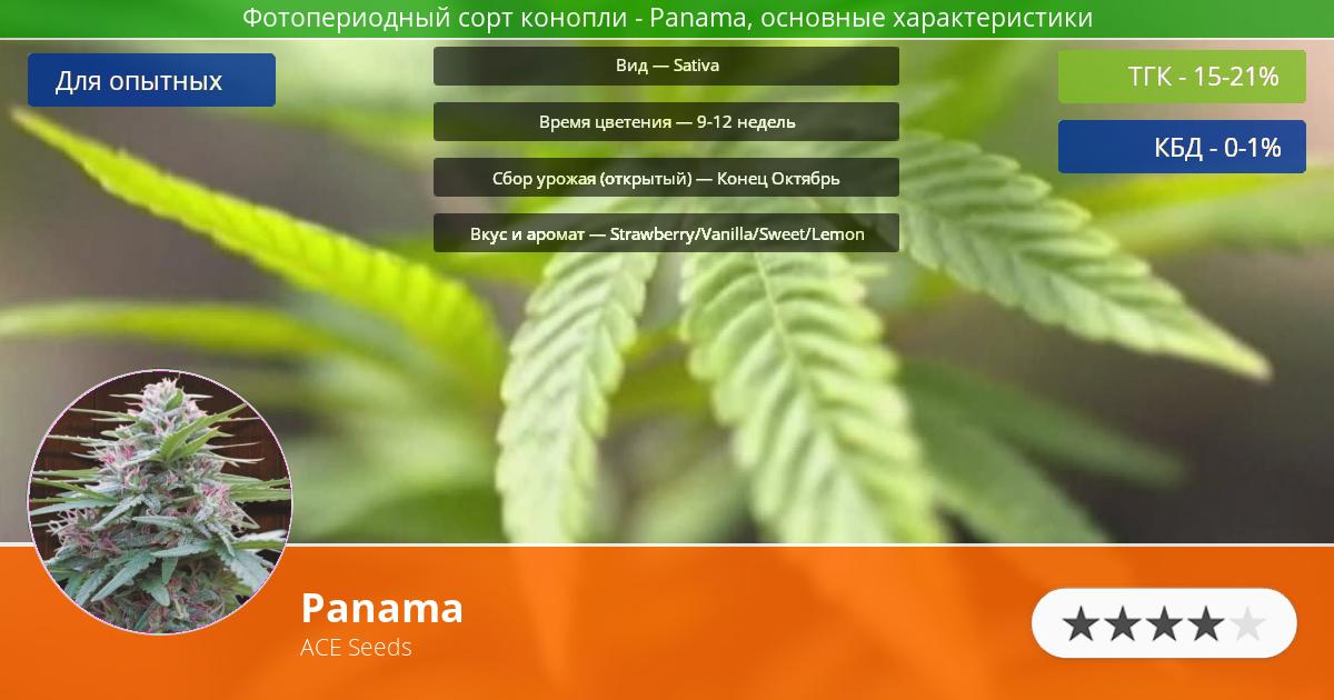 Инфограмма сорта марихуаны Panama