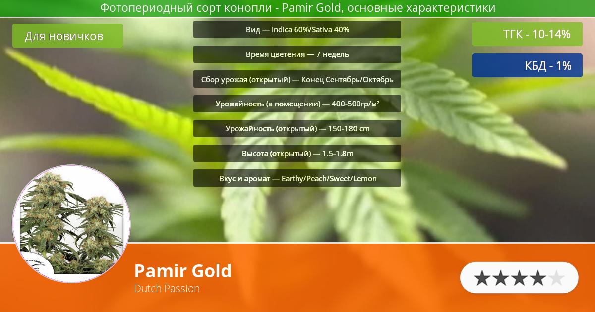 Инфограмма сорта марихуаны Pamir Gold