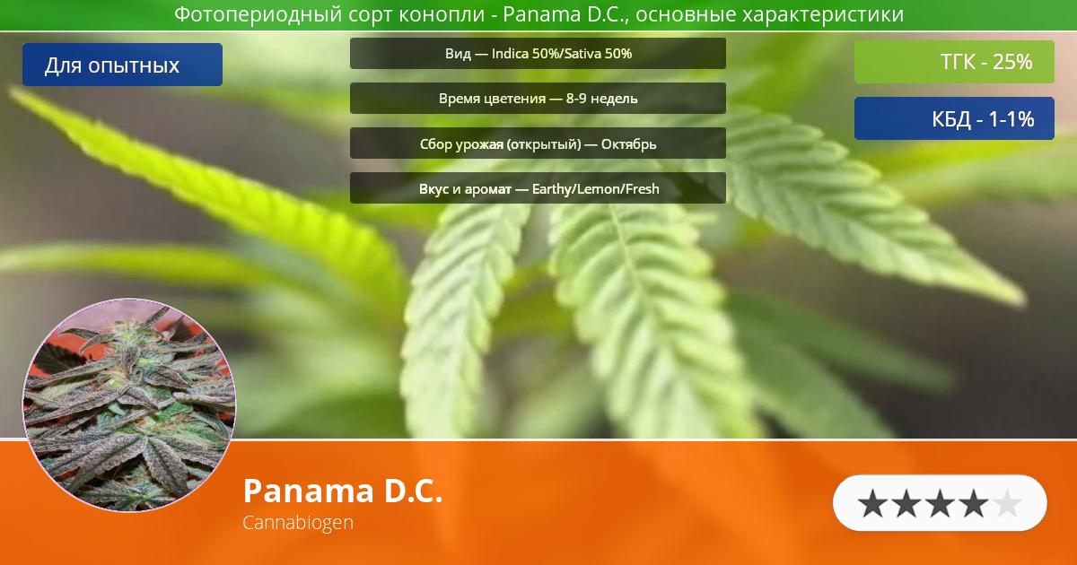 Инфограмма сорта марихуаны Panama D.C.
