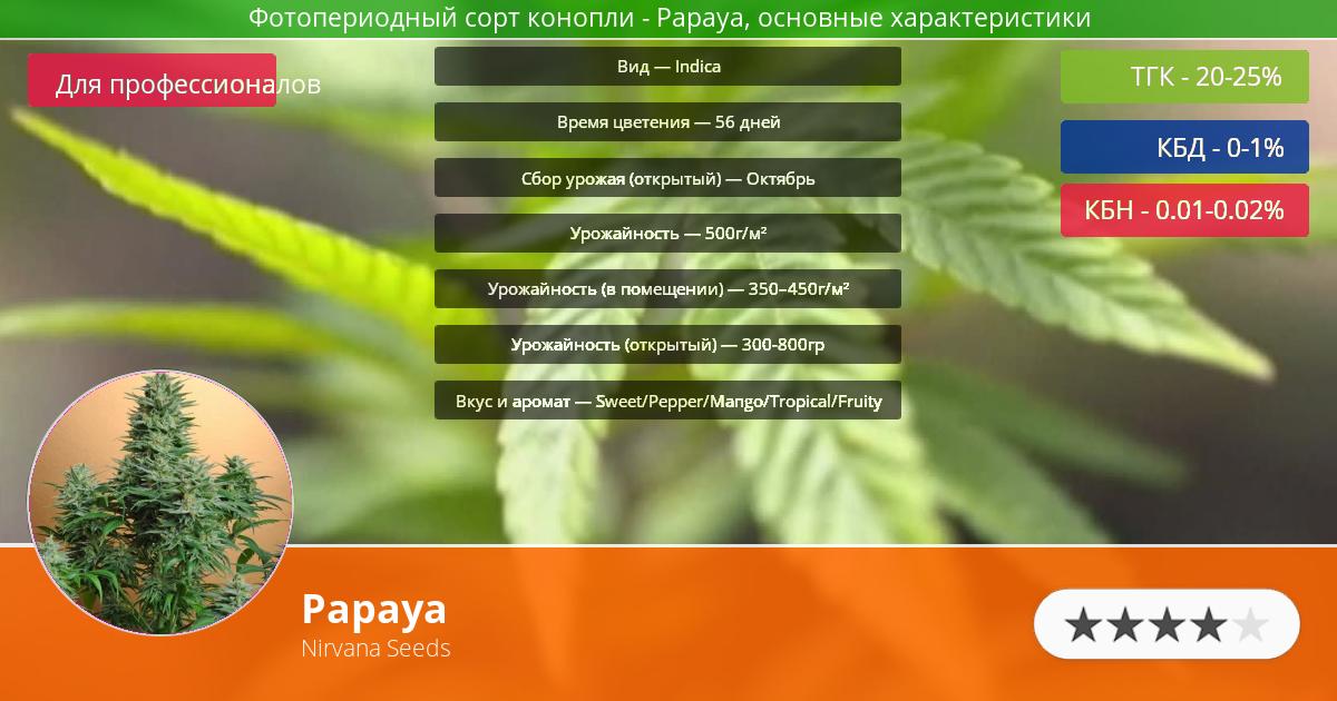 Инфограмма сорта марихуаны Papaya
