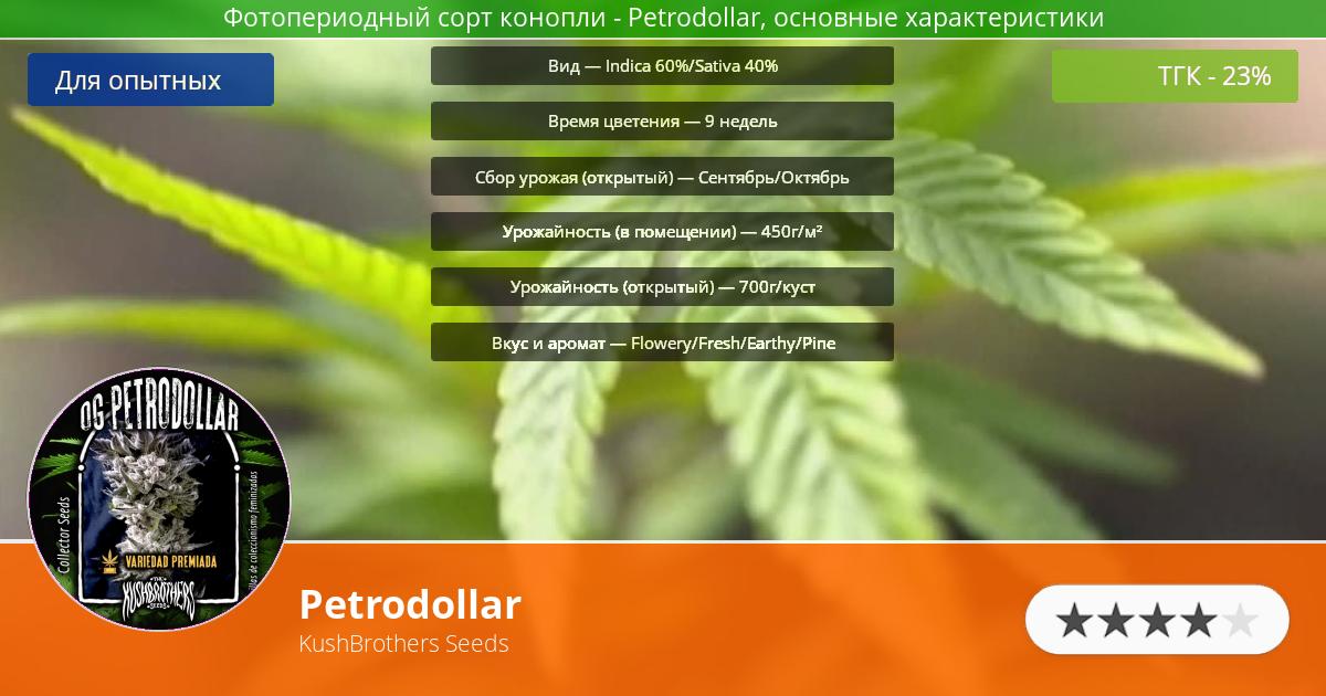 Инфограмма сорта марихуаны Petrodollar