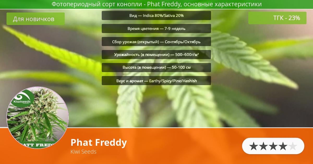 Инфограмма сорта марихуаны Phat Freddy