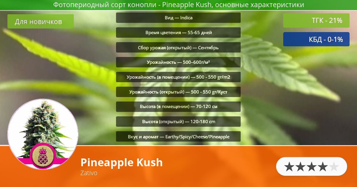 Инфограмма сорта марихуаны Pineapple Kush