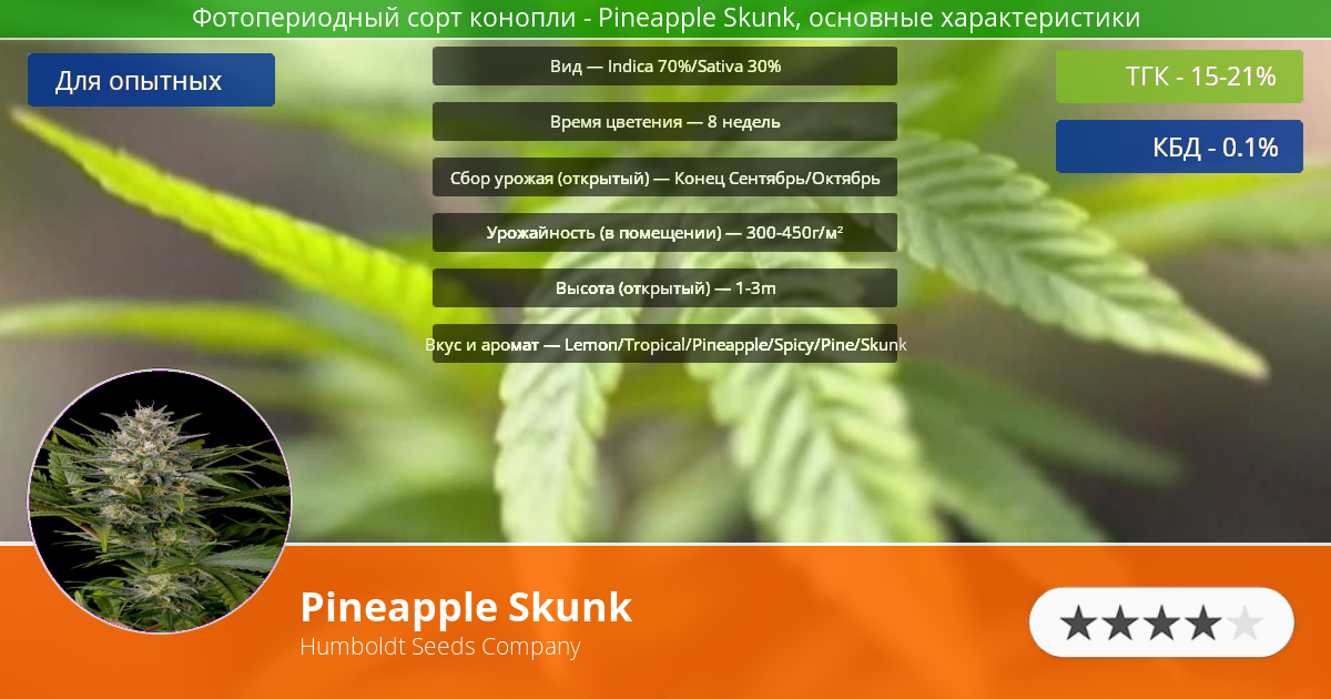 Инфограмма сорта Pineapple Skunk