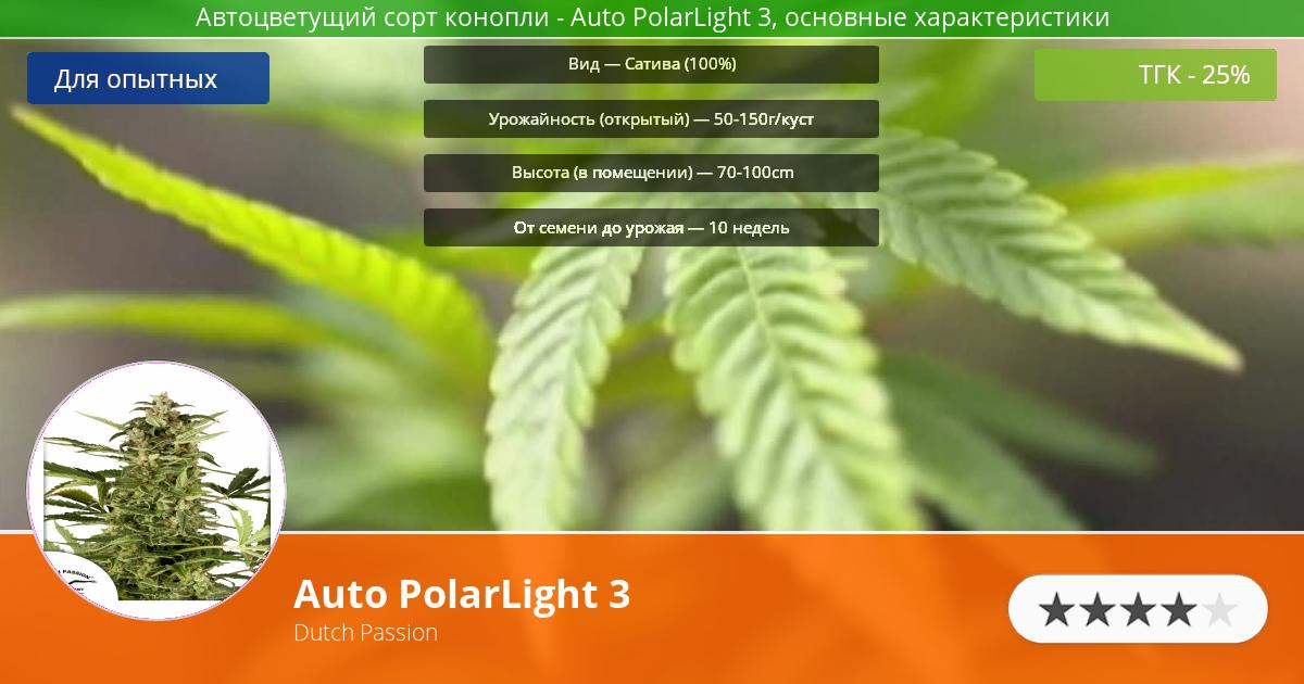 Инфограмма сорта марихуаны Auto PolarLight 3