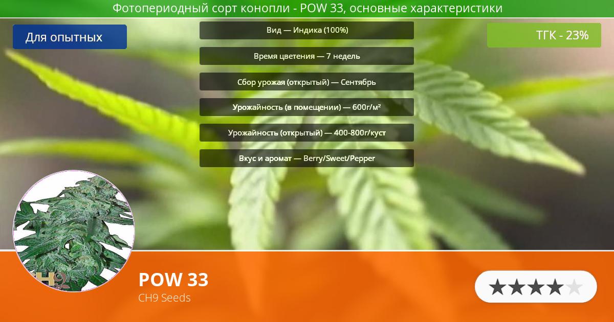 Инфограмма сорта марихуаны POW 33