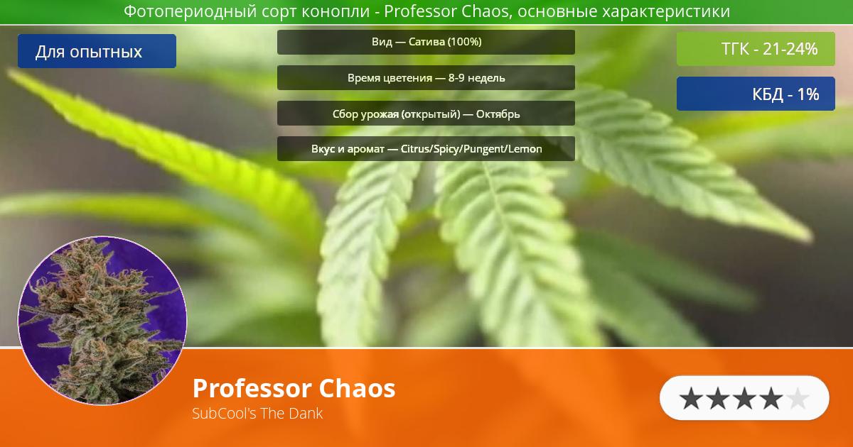 Инфограмма сорта марихуаны Professor Chaos