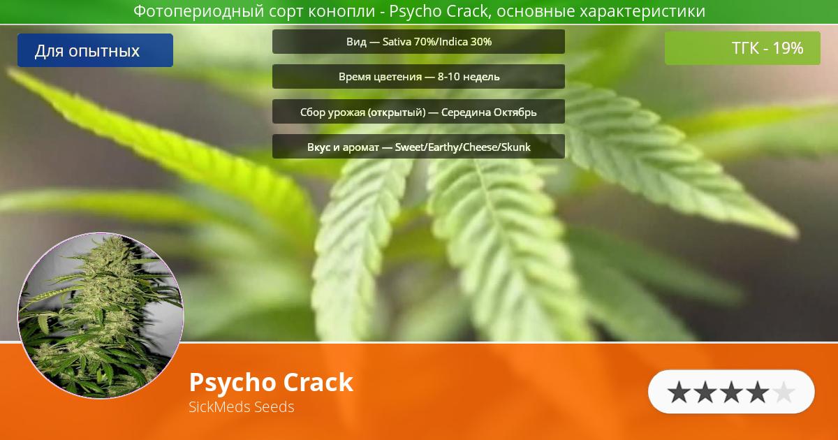 Инфограмма сорта марихуаны Psycho Crack