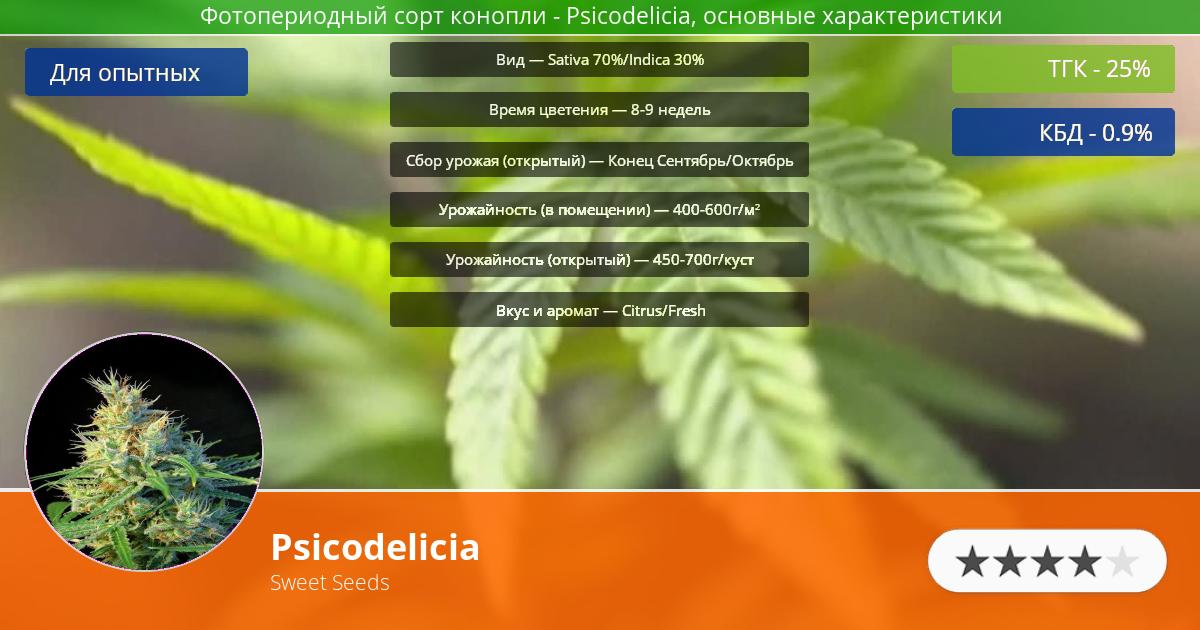 Инфограмма сорта марихуаны Psicodelicia